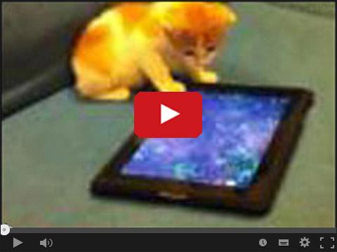 Jak kot reaguje na tablet