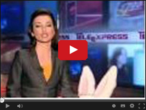 Zając w Teleexpressie