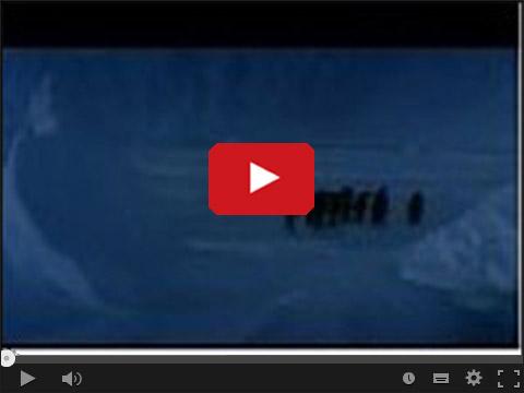 Pingwiny wracają po imprezie