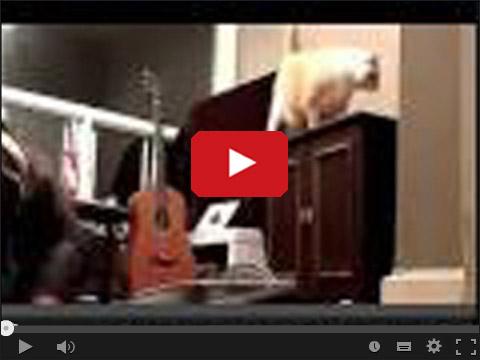Ćwiczenia z kotem
