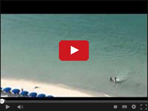 Rekin na rajskiej plaży