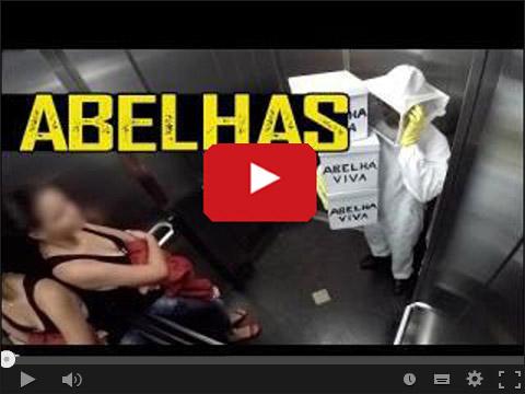 Pszczoły w windzie - Ukryta kamera