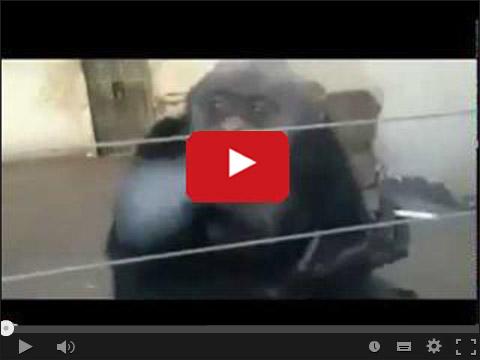 Małpa z papierosem