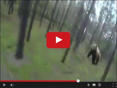 Niedźwiedź zatakował rowerzystę