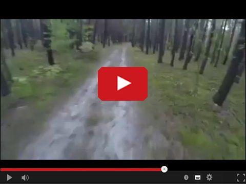 Niedźwiedź goni rowerzystę