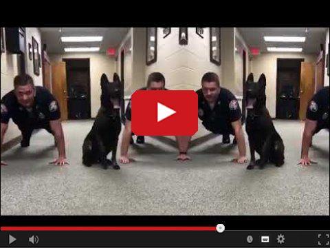 Pies policjant