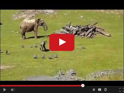 Mały słoń ciamajda