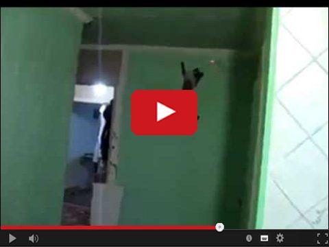 Kot co chodzi po ścianach
