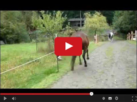 Pierdzący koń