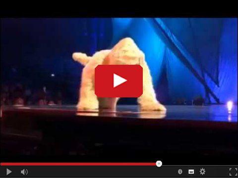 Wielki pies sika na ludzi ze sceny