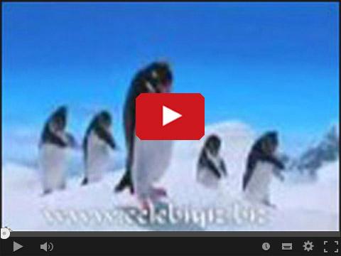 Tańczące i śpiewające pingwiny