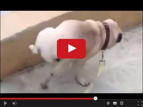 Ten pies wie jak dobrze oznaczyć teren