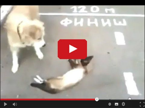 Jak dobrze może się bawić pies z kotem