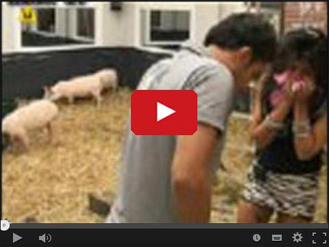 Marco uwalnia Jolę od mieszkania ze świniami