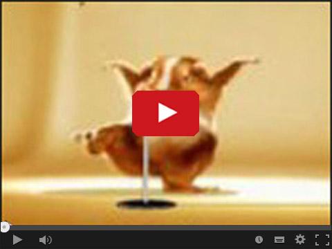 Tańczącu super chomik
