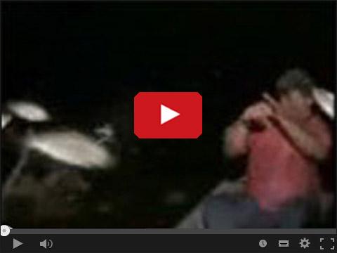 Łowienie zwariowanych ryb